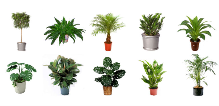 The best 10 indoor plants that purify the air Best small office plants