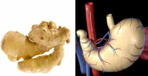 Foods That Look Like The Body Parts - Ginger-Stomach