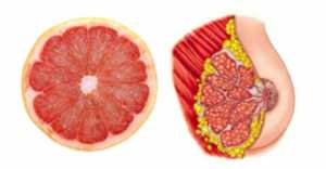 Foods That Look Like The Body Parts - Grapefruit-Breast