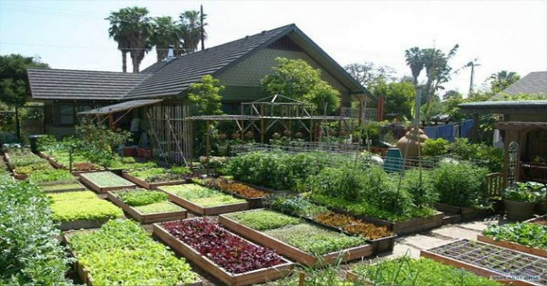 Watch How This Family Produces 6000 Pounds of Food in Their Small Yard