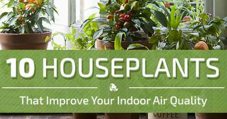 10 Plants to Improve Indoor Air Quality in Your Home