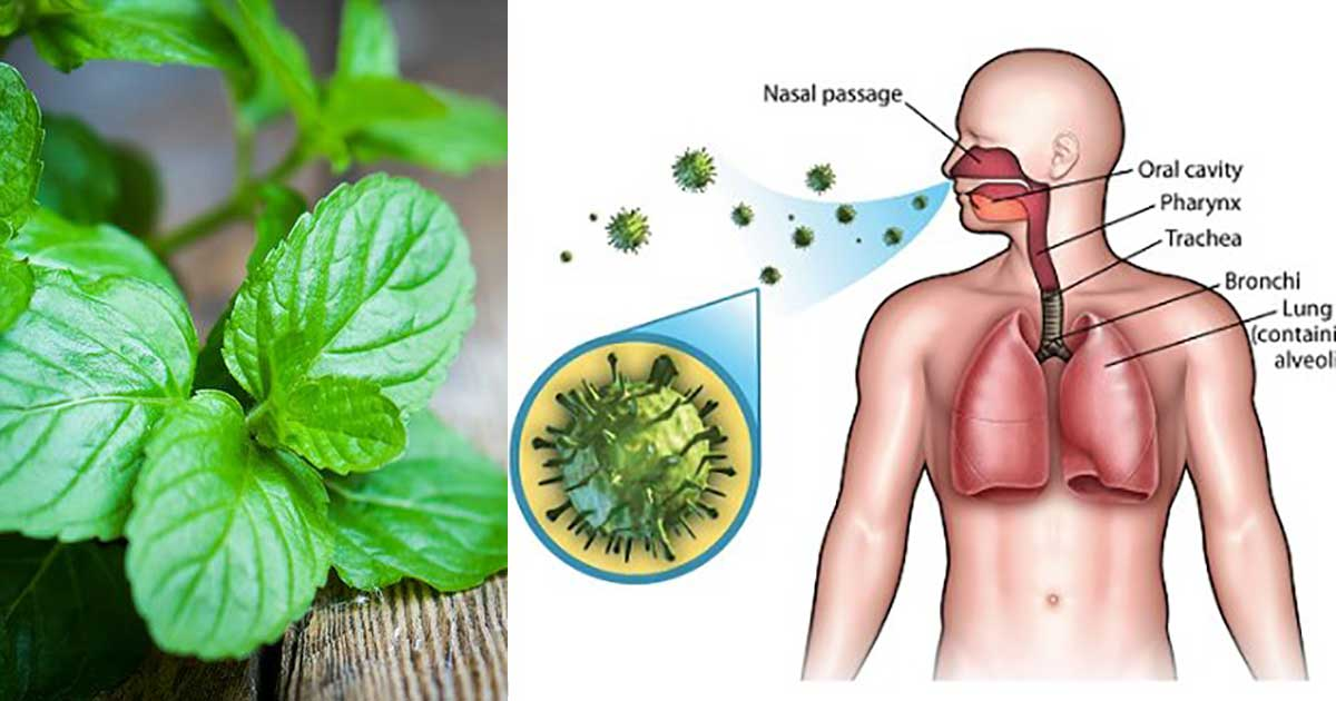 Image result for 9 Herbs to Boost the Immune System and Repair Lung Damage