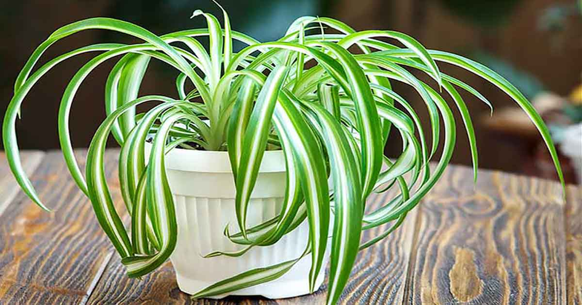 Top 16 Indoor Air Purifying Plants for Your Home