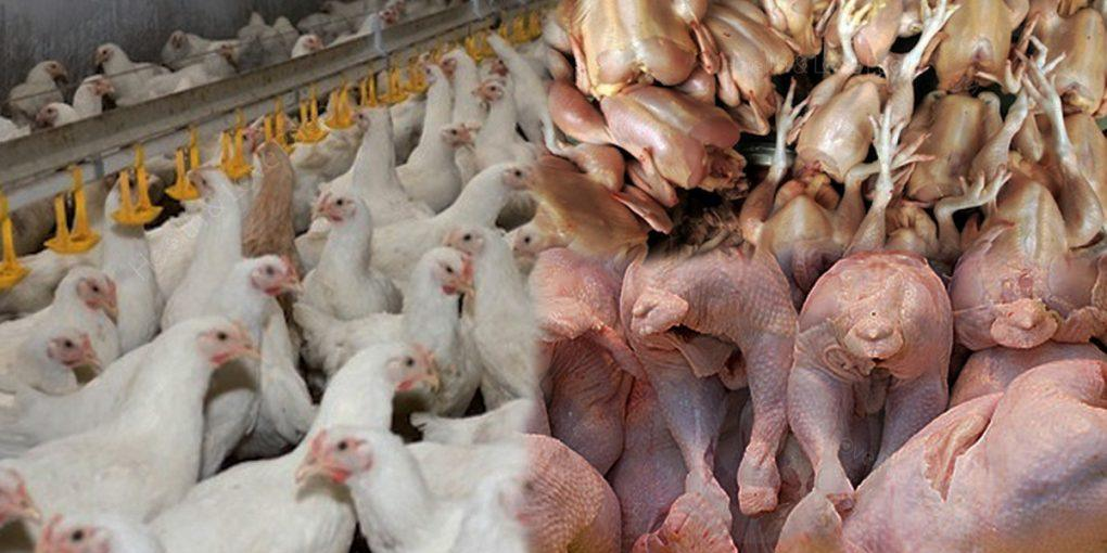 Chicken Sent to China Before Reaching U.S. Tables