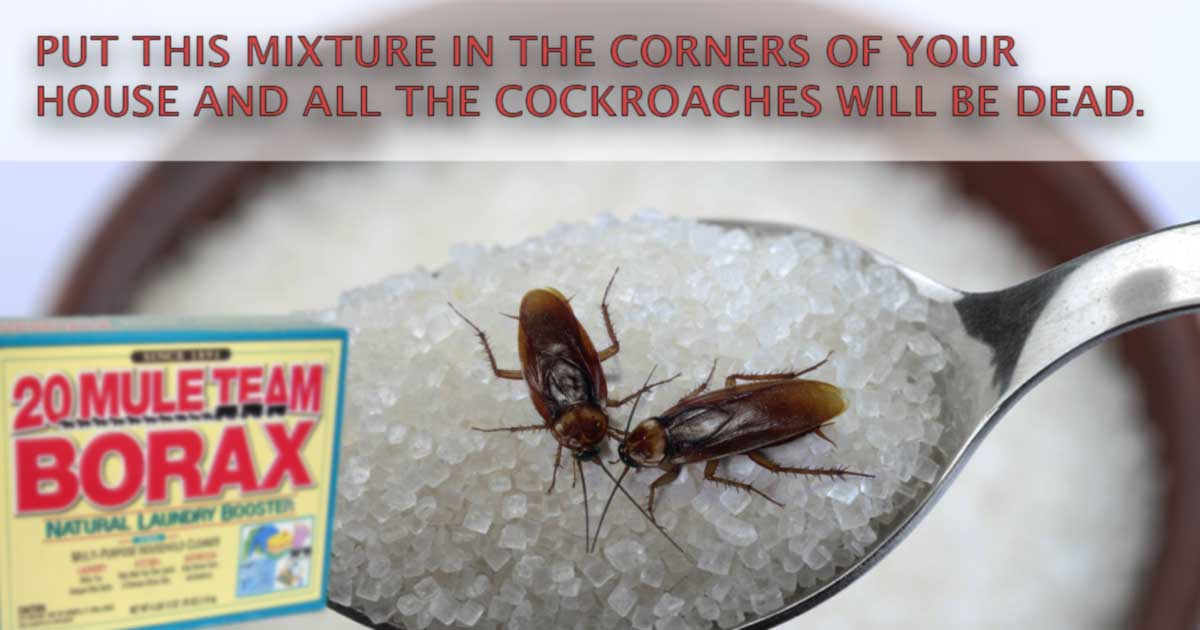 How to Get Rid of Cockroaches With a Method That Really Works
