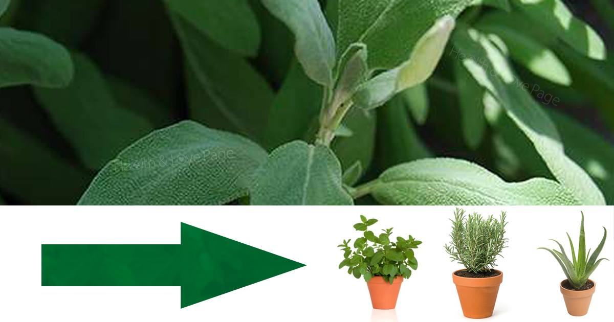 Use These 9 Common Plants to Treat Minor Aches and Pains Instead of Medication