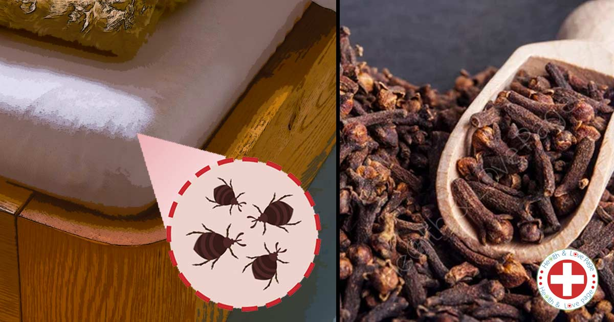 11 Natural Remedies to Eliminate Bed Bugs for Good - Recipes Included
