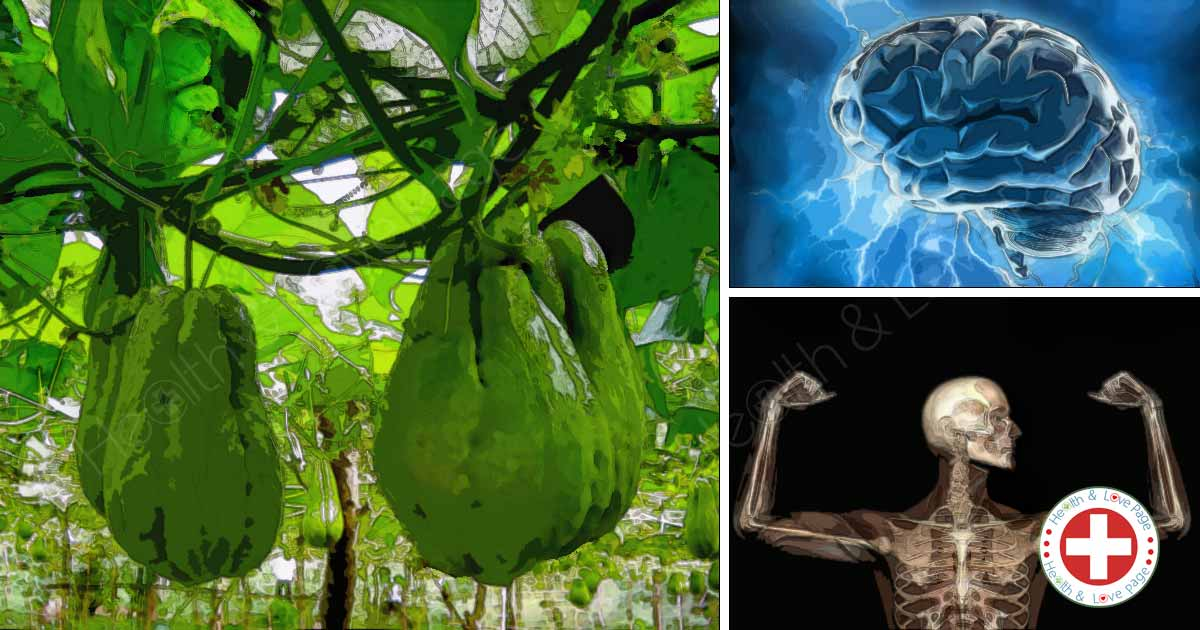 Chayote Can Reduce Blood Pressure, Strengthen the Bones and Improve Memory